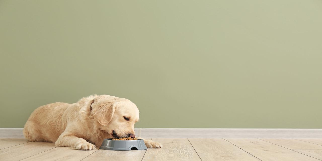 Hundetrockenfutter im Test: Produkt für ältere Tiere großteils mangelhaft; (Bild: Pixel-Shot|Shutterstock.com)