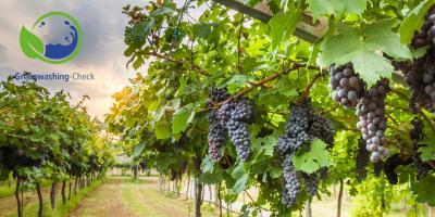 Weingarten mit roten Trauben